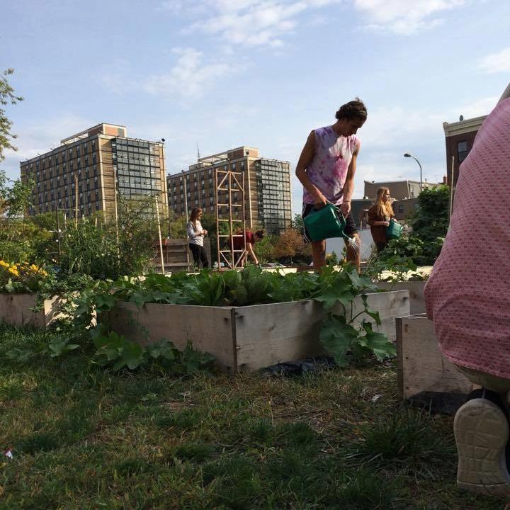 OwlCrowd VIII: Educational Community Garden Restoration